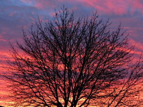 Tree at Sunset.. by Michies-Photographyy