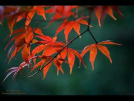 Red Autumn by GMCPhotographics