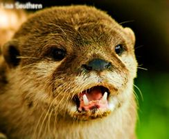 .:Otter Mam:. by LSouthern
