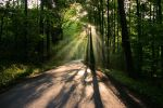 Road in the woods by Vukar