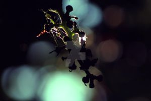 Grapes by LouiseCypher