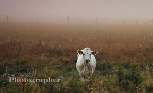 Alone in the mist by Sparvoga