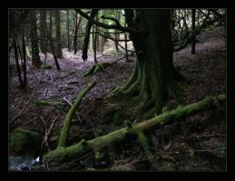 Deep forest of Scotland by Navanna