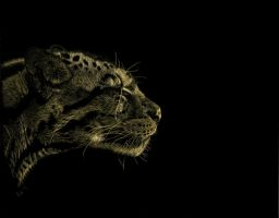 Clouded Leopard by Ileina