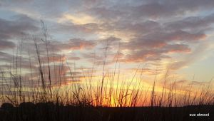 Marsh Reeds at Sunset by zumbaqueen