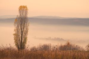 Autum Inversion by ferrohanc