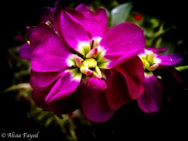 Flower. by Drfayed