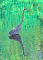 Blue Heron Greeting Card by clippercarrillo