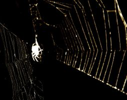 Web by Sakura060277