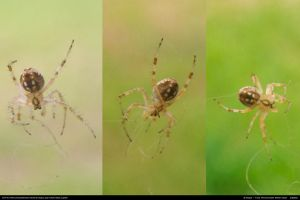 Spider Stock 0002 by phantompanther-stock