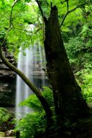 Waterfall Through the Trees by nectar666