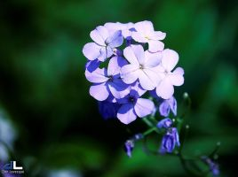 The Beauty of Flowers - part 2a by imonline