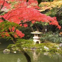 Japanese garden by a-nyul
