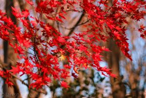 Glowing leaves by larksgar