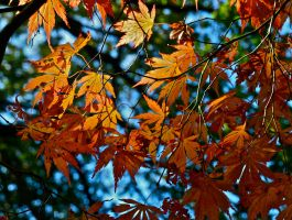 Autumn colours by gee231205