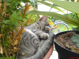 kitten in a flower pot 2 by DaRealRelic