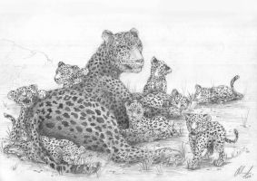Family Of Leopards by moefoe