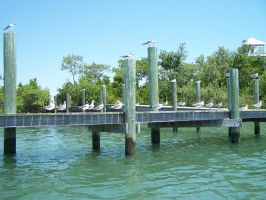 Seagull Dock 1 by Polly-Stock