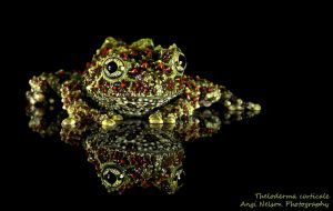 Vietnamese mossy frog 2 by AngiWallace