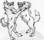 Wolf fight by LunaWolfPup