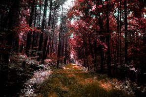 green forests are so last year by DaRaPhotos