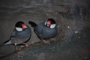 java sparrow 1.2 by meihua-stock