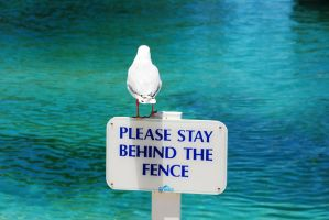 Stay Behind the Fence by bLacKhevN