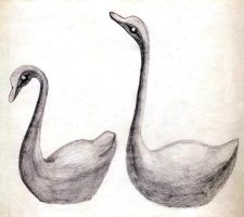 The Swans by sweetmarly