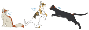 Ember/Storm Kits second litter CONTEST- CLOSED by BettaRae