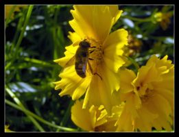 Busy bee 1 by 99-in-the-shade