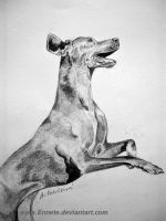 Weimar dog by Ennete