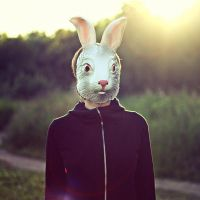 rabbit in your headlights by lafaette
