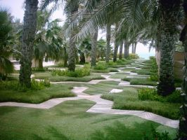 Palms Garden by elhussain