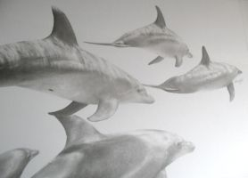 Dolphins Pencil Drawing by Titan360