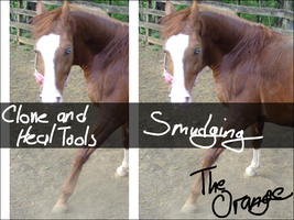 Halter Removal Tutorial by SineSpes