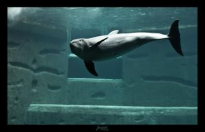Dolphin looking by deaconfrost78