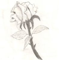 Rose Attempt by arymay2013