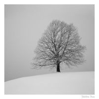 solitree by Zyklotrop