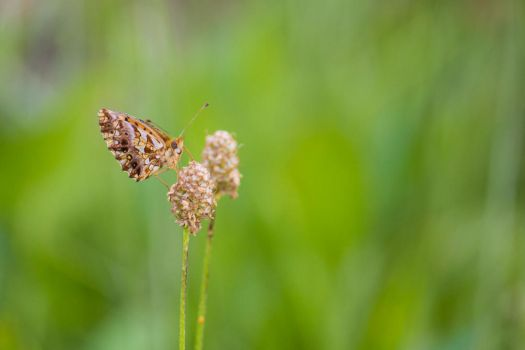 butterfly 1 by Corsico