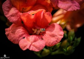 Emerging From the Flower by mjohanson