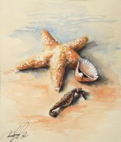 Starfish 3 by radina