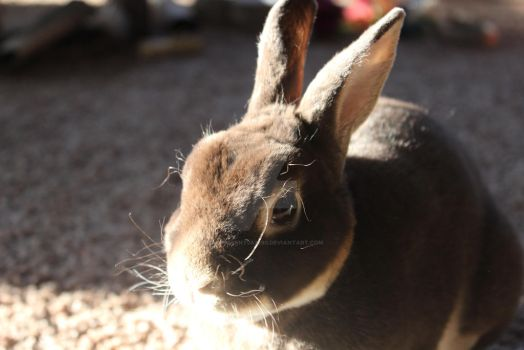 Rummy in the Sun by HalfTalent082690