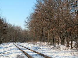 Snowy Tracks by GlimmerofHopeImages