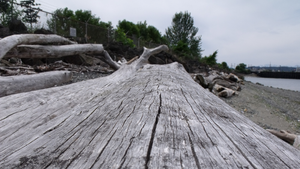 Driftwood by sjhorm