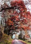 Red Autumn by Caillean-Photography