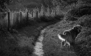 The Walk by dl-p
