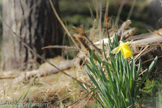 Spring by Alex-to-the-ander