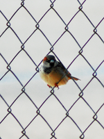 Bird on Wires by Resaturatez