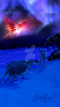 wolves at night by Tom-in-Silence
