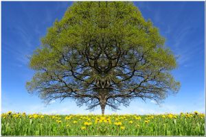 Mighty tree... by Yancis